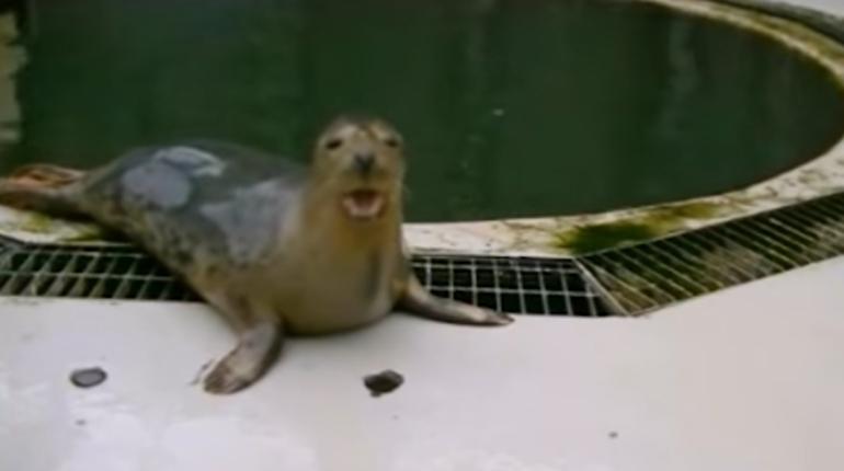 Seal Sings Song